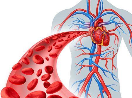 Объём циркулирующей крови