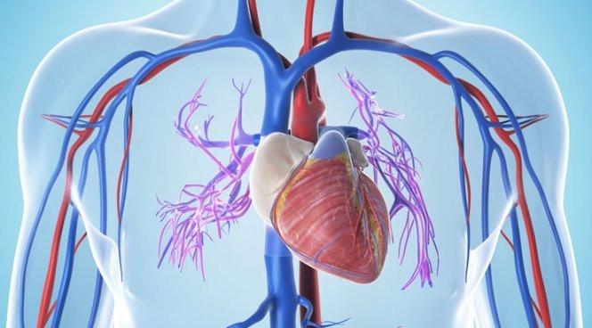 сердечная мышца при гипертонии 2 степени