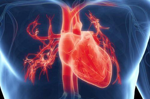 Сердце. Теряется способность нормально функционировать