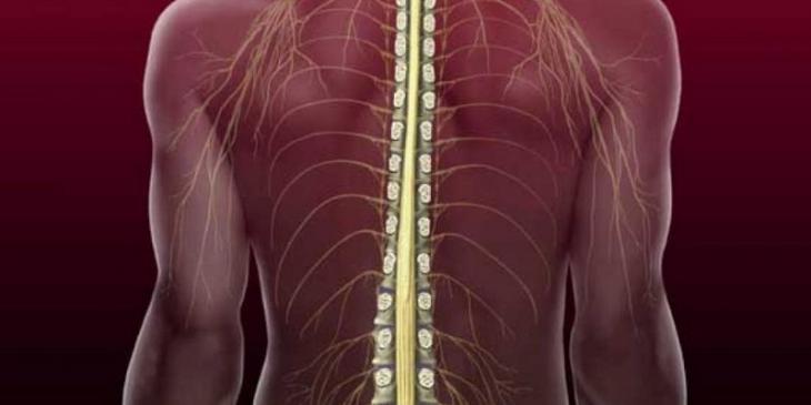 Нарушение работы спинного мозга