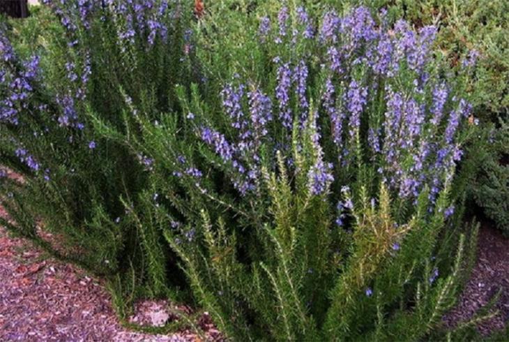 Изображение - Травы повышающие давление при гипотонии 198_15211423128