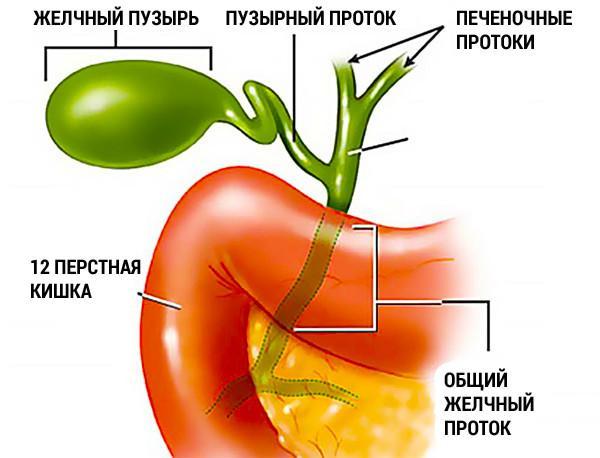Противопоказания к употреблению ягод