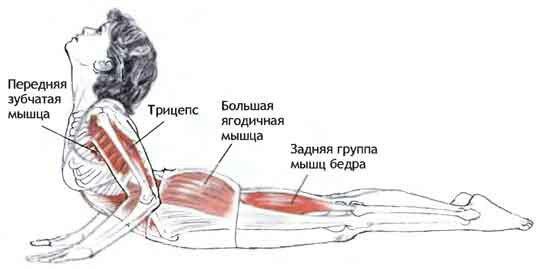 «Рама». Упражнение направлено на растяжку трапециевидной мускулатуры шейного отдела