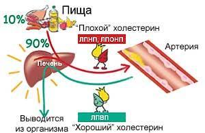 Снижаются и нормализуются показатели холестерина